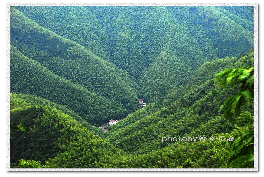 加快推进现代农业发展:屏南——竹业科技园助竹农增收