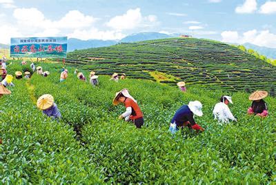 竹业节水灌溉设备工程