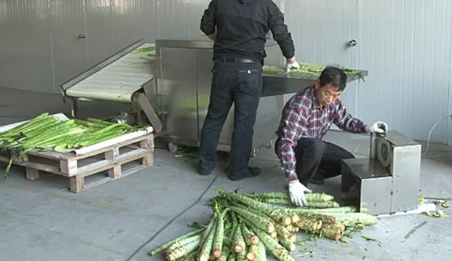 大量供应优质莴苣剥皮机