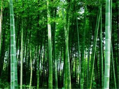 壁纸 风景 森林 植物 桌面 500_375